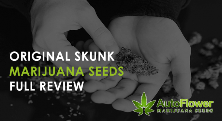 original skunk seeds