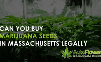 can you buy marijuana seeds in massachusetts