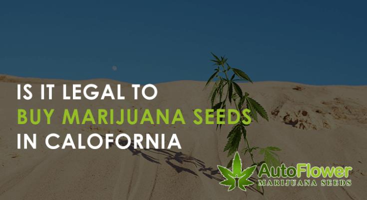 buy marijuana seeds in california