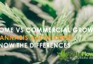 how to grow autoflowering cannabis seeds