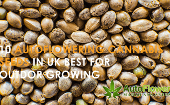 cannabis seeds outdoor uk