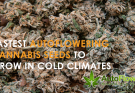 fastest autoflowering cannabis seeds