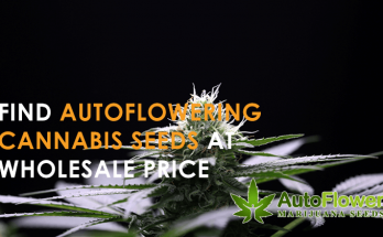 wholesale autoflowering cannabis seeds