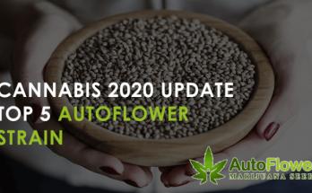 best autoflower strains 2020