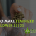 how to make feminized autoflower seeds
